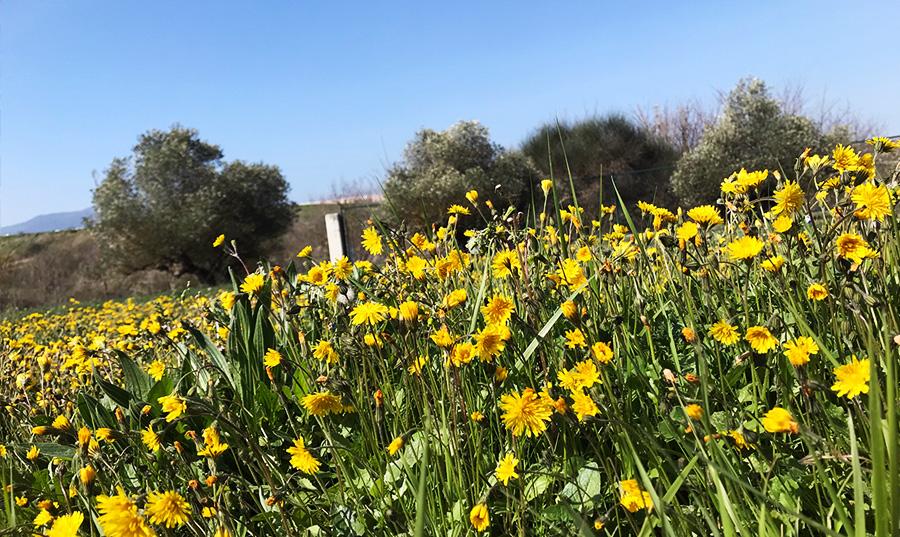cenifer jardín del sol